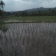 Tanah dijual di Purwakarta, Strategis, Murah, Cocok untuk Cluster 400rb.