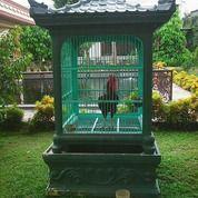 Kandang Cendrawasih Beton (8416989) di Kota Bekasi