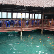 Pulau Ayer - Package (9453669) di Kota Jakarta Utara