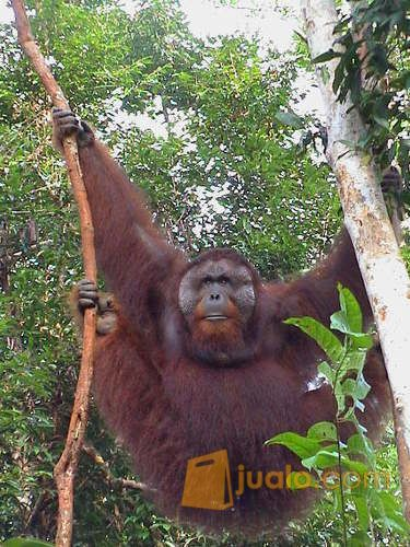 Tanjung Puting Tour & Travel (11019241) di Kab. Kotawaringin Barat