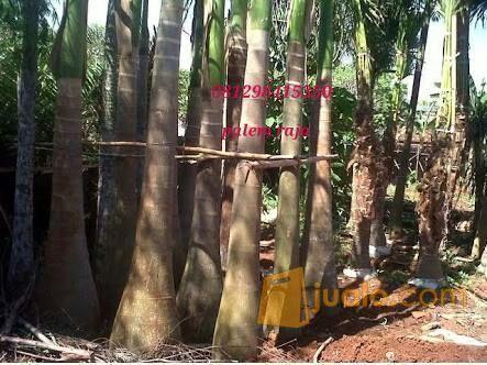 Kami adalh supplier t kebutuhan rumah tangga konstruksi dan taman 11482303