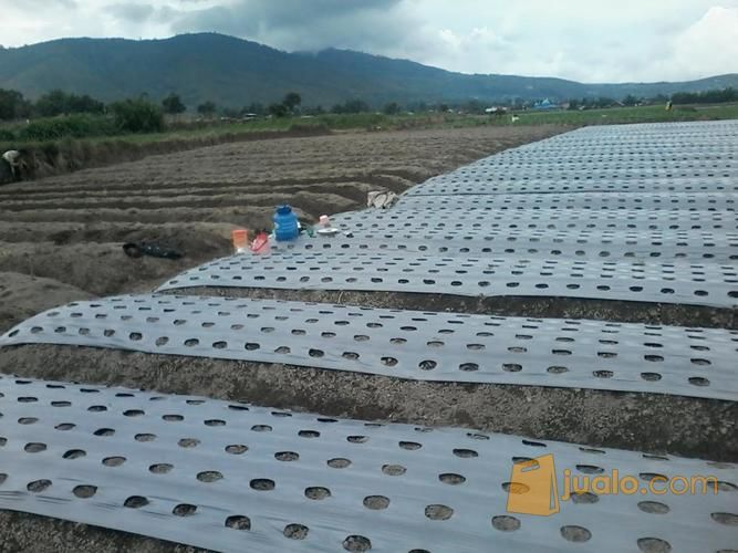 Plastik Mulsa Berbagai Merk Harga Murah Barang Berkualitas (12232595) di Kab. Sidoarjo