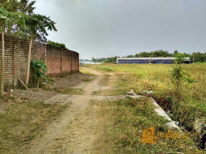 Invest tanah kavling tanah dijual 12606109