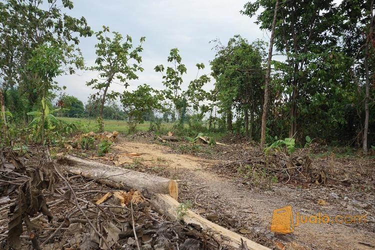 Tanah kavling krembun tanah dijual 12623333