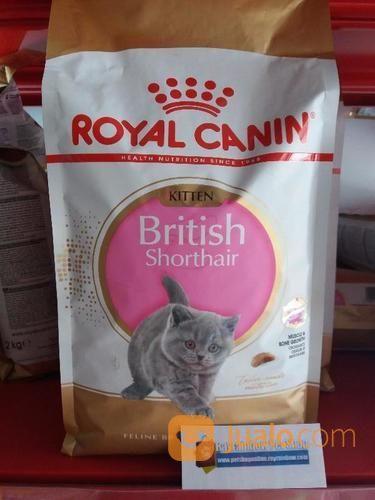 Royal Canin Kitten British Shorthair Makanan Kucing Tangerang Selatan Jualo