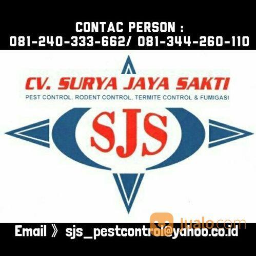 Jasa Pest Rodent Termite Control Fumigasi Kab Jayapura Jualo