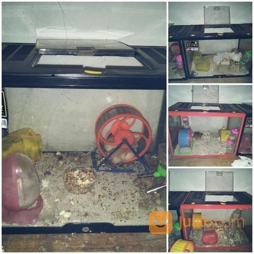 Paket Kandang Hamster (14436307) di Kota Bekasi