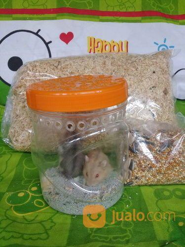 Hamster Winter Argente Dan Saphire Paket (14585037) di Kota Tangerang Selatan