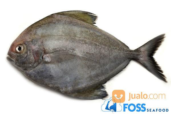 Foss Seafood Ikan Bawal Hitam Frozen Food (Beku) Size 300gr-500gr (14636167) di Kota Tangerang