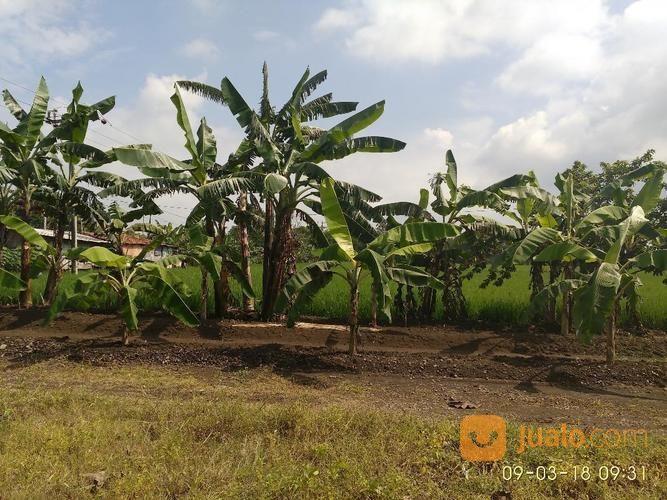 Tanah luas 1596m2 str tanah dijual 14736549