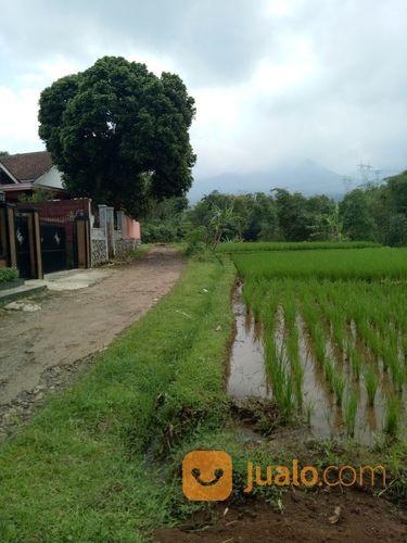 Sawah Luas Pinggir Jalan (15622641) di Kota Bandung