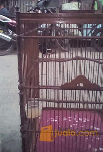 Kacer Ngobra Jakarta Utara Jualo