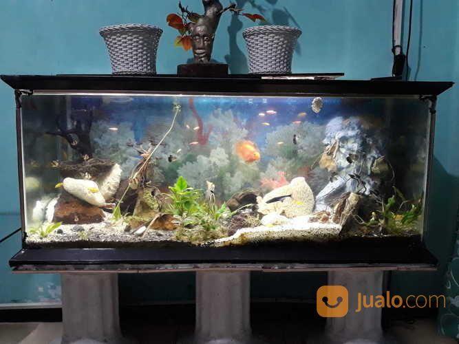Aquarium Aquascape Besar Malang Jualo