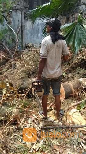Jasa tebang pohon jas jasa dan pekerjaan lainnya 17282987