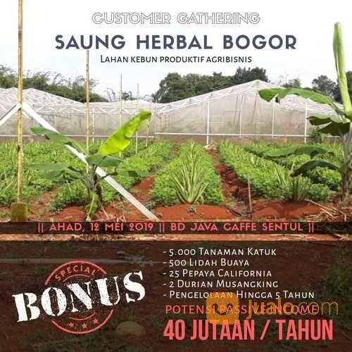 Saung herbal produkti tanah dijual 19898167
