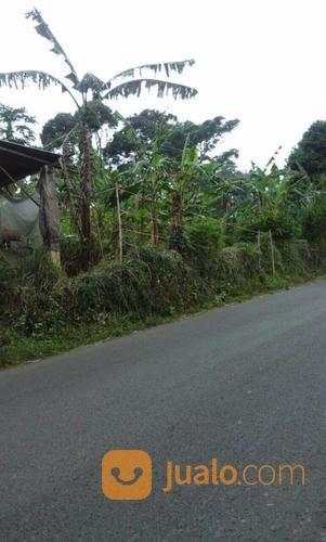Kavling Cijeruk Palasari Bogor (Ukuran 15.000 M2) (19955907) di Kab. Bogor