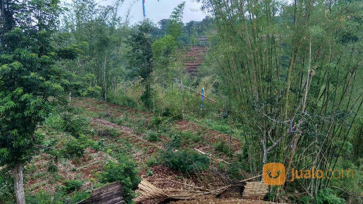 Murah Tanah Pekarangan Dekat Kampus UIN 3 Kota Batu Malang (20200863) di Kab. Malang