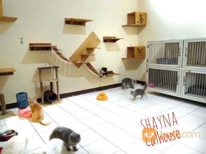 Penitipan Kucing Bintaro (20406487) di Kota Tangerang Selatan
