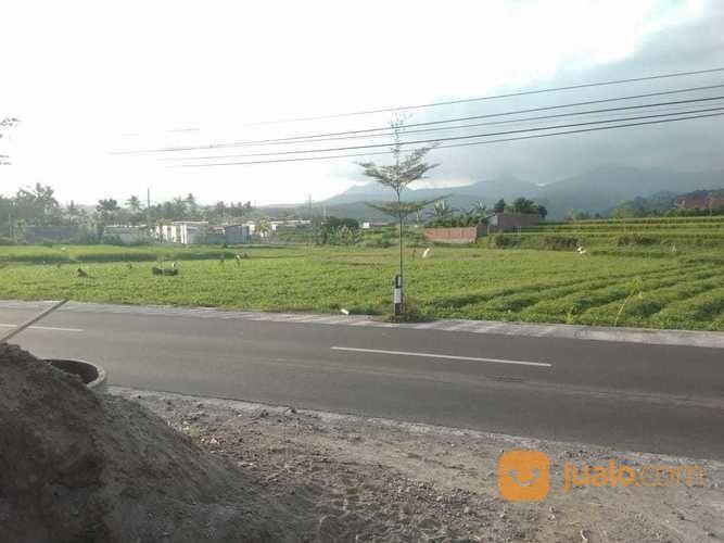 Tanah Strategis Cocok Untuk Perumahan Jl. Raya Mambalan (20723011) di Kota Mataram
