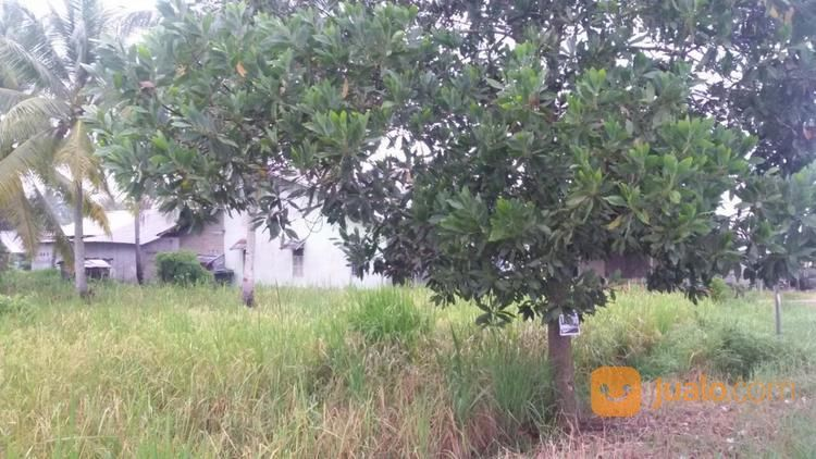 Tanah Murah Pal 13 Kakap, Pontianak (20837599) di Kab. Kubu Raya