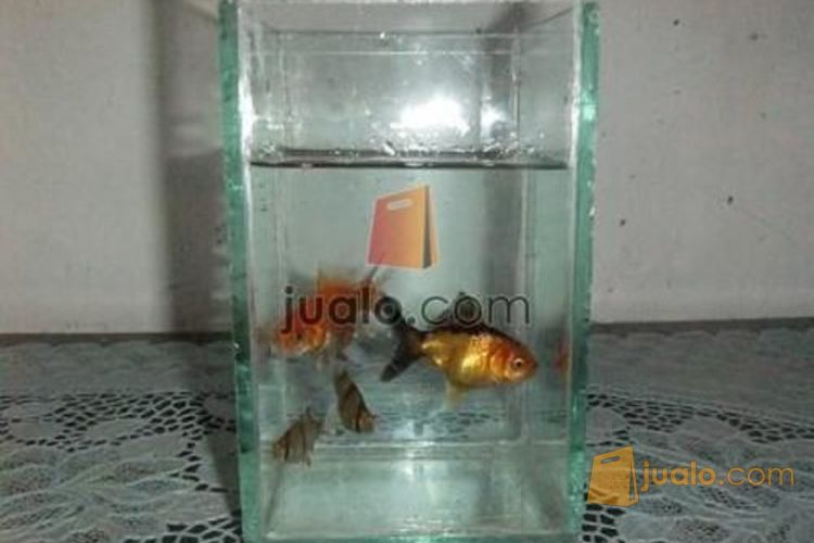 Jual Aquarium Mini Murah Di Bengkulu Bengkulu Jualo
