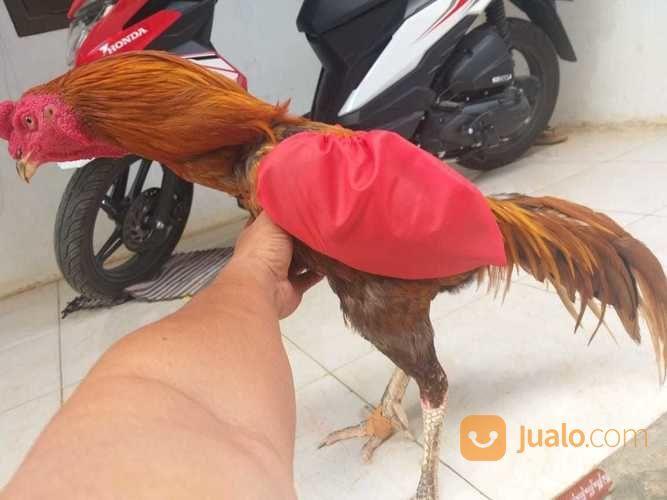Bungkus sayap ayam makanan aksesoris 22182335