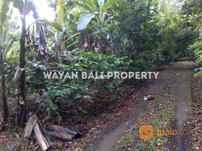 Jual Kebun Durian Di Bali