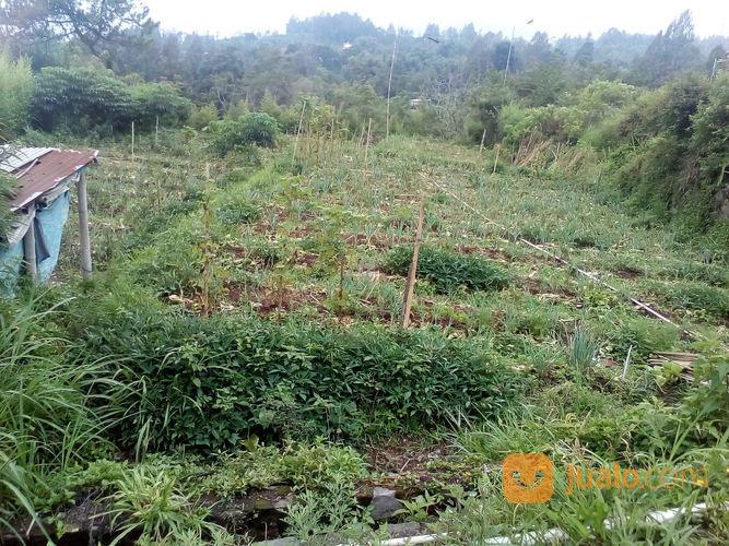Tanah Murah Pinggir Jalan Raya Persis, Cocok Buat Usaha Apapun, Kopeng (23005667) di Kab. Semarang