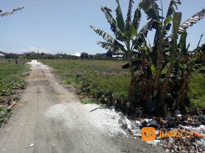Tanah 250M2 Jln. Carik Pura Demak Denpasar Barat (24341955) di Kota Denpasar