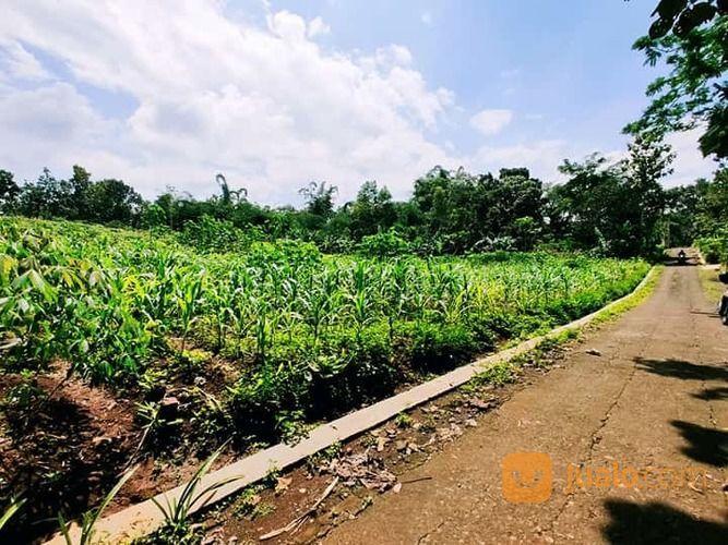 Tanah 5000m2 Siap Dibangun Karanganyar (25134451) di Kab. Karanganyar