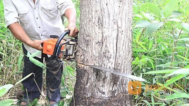 Jasa Tebang Pohon Di Medan (25811327) di Kota Medan