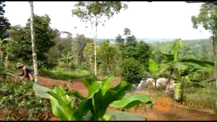 Murah Tanah Kebun 6364 M2 Di Bojong Purwakarta Jawa Barat (26997107) di Kab. Purwakarta