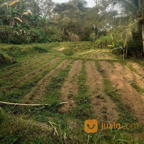 Tanh Sawah Murah Di Cariu Jonggol (27154131) di Kab. Bogor