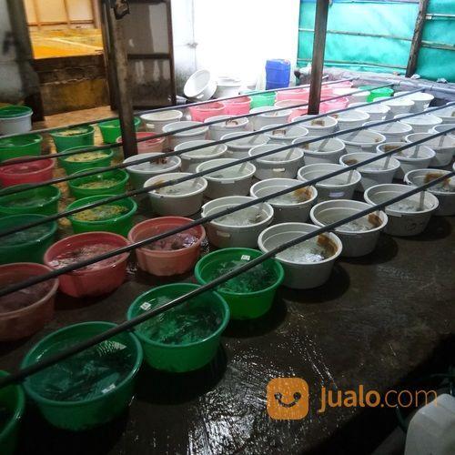 Ikan Kerapu Super 081236232495 (27245763) di Kab. Buleleng