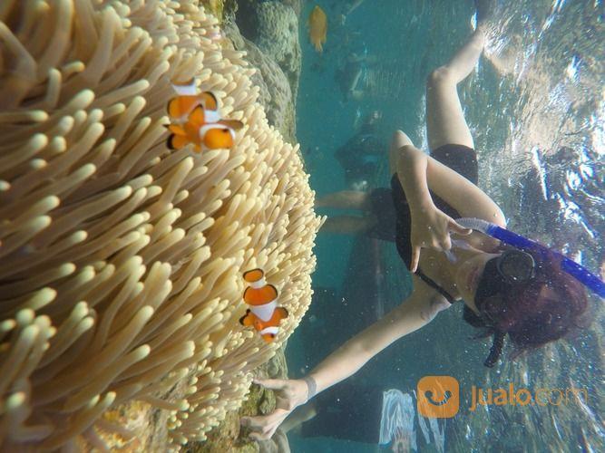 Open Trip Pulau Pahawang + Teluk Kiluan 2020 (27408171) di Kab. Karawang