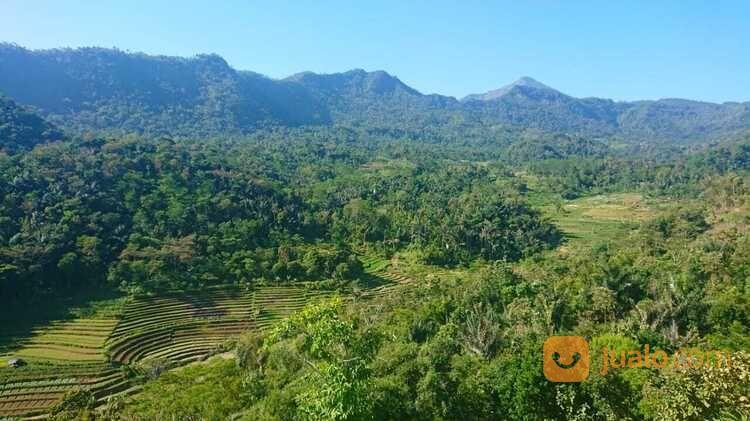 Tanah Kebun Durian Cocok Untuk Agro Wisata Rawa Pening Salatiga Jualo