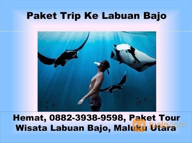 Harga, 0882-3938-9598, Paket Wisata Labuan Bajo Pulau Komodo, Gorontalo (29438068) di Kota Semarang