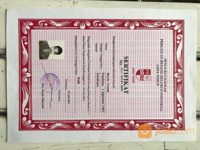 Les Kursus Privat Renang Surabaya (29439616) di Kota Surabaya