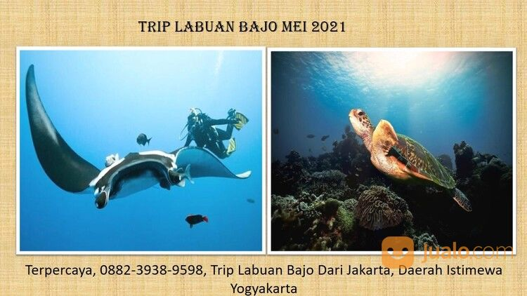 Terjangkau, 0882-3938-9598, Berapa Harga Trip Ke Labuan Bajo, Maluku (29525217) di Kab. Seram Bagian Timur