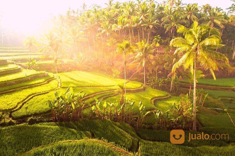 PAKET TOUR UBUD MURAH - TEGALALANG (30042252) di Kab. Badung