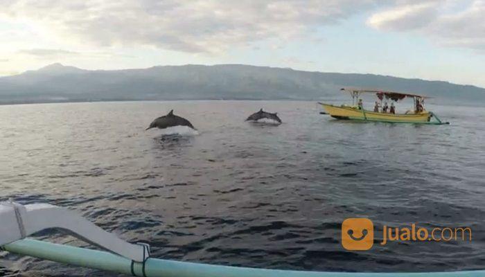 Tiket Dolphin Lovina Gratis Kunjungan Ke Taman Laut (30107262) di Kab. Buleleng