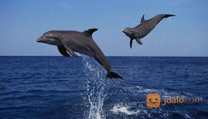 Tiket Dolphin Lovina Gratis Kunjungan Ke Taman Laut (30107263) di Kab. Buleleng
