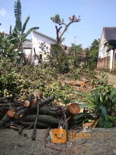 JASA/TUKANG TEBANG POHON (30438200) di Kota Depok
