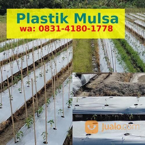 Grosir Mulsa Plastik Terdekat (30770302) di Kota Bengkulu
