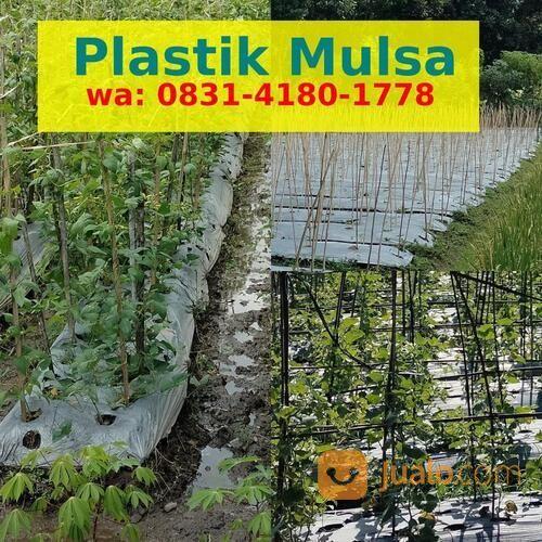 Harga Plastik Mulsa Termurah (30900875) di Kab. Bantul