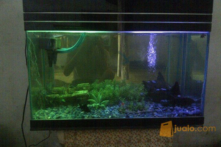Aquarium Besar Sedang Murah 400rb Bisa Nego Kab Gresik Jualo