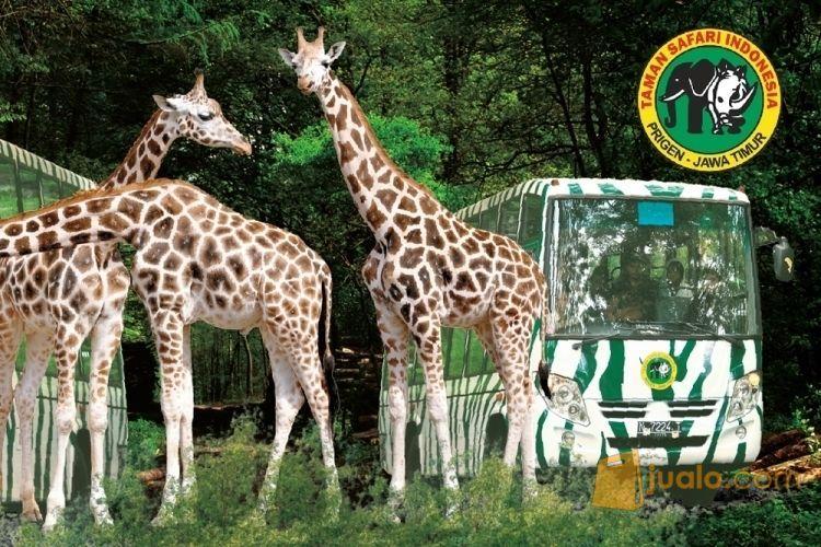 Paket Wisata Taman Safari (9119601) di Kota Surabaya