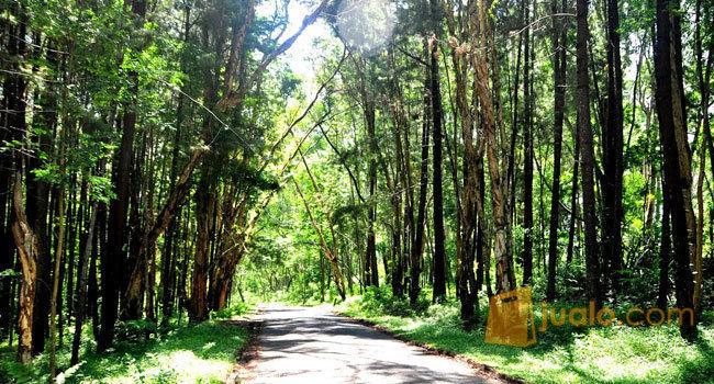 Paket Liburan Sekolah Ke Hutan Pinus (9402453) di Kota Surabaya