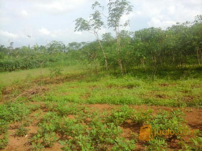 Tanah 5 Hektar Cocok untuk Perumahan di Linggasari Darangdan Purwakarta (9945645) di Kab. Purwakarta