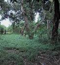 TANAH & RUMAH 5560 m2 KARANGASEM, JAJAR, LAWEYAN, SOLO (1098433) di Kota Surakarta
